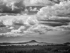 Clouds of Serengeti (davdenic  in the sky ) Tags: africa blackandwhite nature monochrome tanzania safari serengeti savanna savana