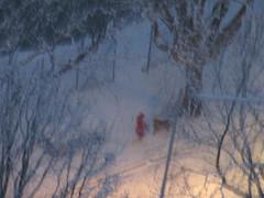 Le petit chaperon rouge (andrscho) Tags: rouge hiver neige chaperon