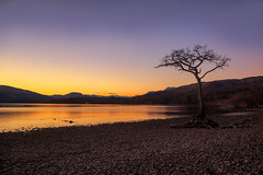 The Lone Tree, Milarrochy Bay (MilesGrayPhotography (AnimalsBeforeHumans)) Tags: uk longexposure winter sunset sky tree skyline canon reflections landscape outdoors photography eos golden evening scotland rocks europe glow britain dusk scenic nd loch iconic ef lochlomond lonetree waterscape 6d f4l nighfall canonef24105mmf4lisusm milarrochybay canon6d