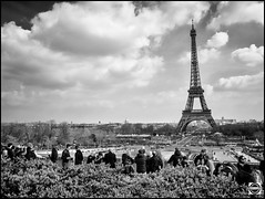 Paris snapshot Segway tour - Tour Eiffel (nobru2607) Tags: paris monochrome 28mm streetphotography snap nb monochrom sreet ricoh bwphotography grd3 grdiii