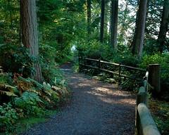 Stanley Park, Vancouver B.C. (GWP_Photo) Tags: park trees vancouver forest nikon d70s stanley siwash