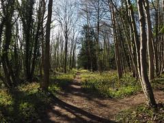 sprotbrough flash woodland path (Johnson Cameraface) Tags: woodland spring olympus naturereserve april f28 doncaster southyorkshire em1 2016 yorkshirewildlifetrust ywt 1240mm sprotbroughflash micro43 mzuiko johnsoncameraface omde1