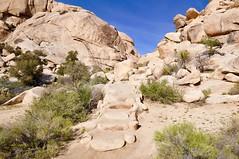 Steps Lead to Over Yonder (Blue Rave) Tags: 2016 joshuatree joshuatreenationalpark california park nature jtnp barkerdamtrail barkerdam steps path pathway trail hike hiking