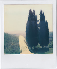 Cypress ~ Pola # 1 (bruXella & bruXellius) Tags: italien italy film nature analog landscape polaroid sx70 italia tuscany cypress toscana expired paysage cupressus toscane landschaft pola italie toskana zypresse instantfilm cyprs polanoid chiusdino instantmagic polagen impossibleproject px70colorshade colorprotection ilobsterit