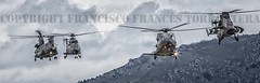 COPYRIGHT FRANCISCO FRANCS TORRONTERA (40) (OROEL (Francisco Francs Torrontera)) Tags: chopper tiger huey helicopter spanish helicopters chinook cougar tigre eurocopter ec135 ch47 ejrcitodetierra uh1 as532 attackhelicopter cargohelicopter ec665tigre ejrcitoespaol uh1h ch47d uh1huey spanisharmy ch47chinook fuerzasarmadasespaolas famet as532cougar ec665 helicoptercrew heavyhelicopter tigrehap spanisharmyhelicopter cougaral ha28hap fuerzasaeromvilesdelejrcitodetierra tigerhap airbushelicopter