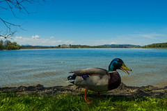 Fraueninsel-012 (andreas.breu1) Tags: boot see stand wasser ente sonne schiff chiemsee chiemgau