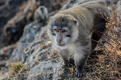 DSC_2005 (Asylum Pixels) Tags: food monkey volcano java southeastasia tent adventure mountaineering porter sherpa adrenaline lombok eruption macaque alpinism mountrinjani lombokindonesia