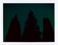 Points (Joann Edmonds) Tags: trees black green film dark polaroid pointy moody treetops instant fujifilm expired heated darkgreen messedup packfilm 2011 peelapart polaroidweek fp100c roidweek polaroidland450 savepackfilm
