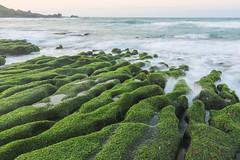 Green Rocks of Lao Mei () Coast, Taiwan (davidcmc58) Tags: ocean rock pacific taiwan algae