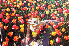 Mind Petals (Hayden_Williams) Tags: flowers film nature girl analog pose garden spring colorful warm hand tulips natural doubleexposure palm multipleexposure flowerbed fd50mmf18 bloom analogue canonae1 kodakgold200 paintedpalm
