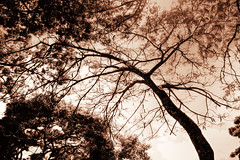 (victorcamilo) Tags: life travel brazil color tree nature brasil contrast canon cores natureza vida viagem rvore cor goias praaruibarbosa canonlens ipameri victorcamilo victorcamio