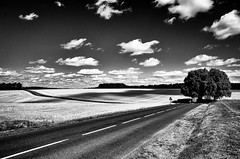 Dark shadow spreading across the fields (Vanvan_fr) Tags: road trees shadow sky blackandwhite bw france nature clouds countryside photo noiretblanc perspective ombre route arbres gr nuages campagne cloudysky touraine