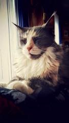 Weatherblues (Alex M. Wolf) Tags: schnee cats snow weather cat feline gato katze feliz gatto sheila wetter felin felidae alexmwolf