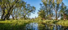 Spring Flooding (Alex Demich) Tags: blue trees sky panorama reflection tree green nature water grass cane river landscape evening countryside spring flooding stream outdoor sunny surface ukraine willow