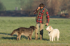DSC04868_s (AndiP66) Tags: schweiz sheep shepherd sony flock meadow wiese luzern alpha herd ch schafe flockofsheep hinterland hirte herde f456 schafherde luzerner sonyalpha kantonluzern rottal altbüron andreaspeters cantonoflucerne sony70400mm 77m2 sal70400g2 sony70400mmf456gssmii wässermatten a77ii ilca77m2 77ii 77markii slta77ii rottalerwässermatten