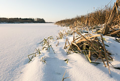 Withered grass on the bank of the snow-covered bayou (andrey.senov) Tags: winter snow ice grass river frost fuji russia january bayou fujifilm      kostroma    xa1  35faves  fujifilmxa1