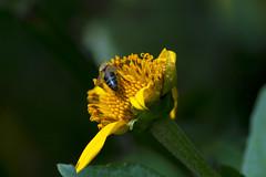 No petals? (uisllc7) Tags: approaching