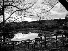 Shashin - DSCN2915 (Mathieu Perron) Tags: life city bridge people bw white black monochrome japan nikon kyoto noir perron daily nb journey   mp blanc japon personne ville gens vie mathieu   sjour    quotidienne  ryanji     p520  zheld