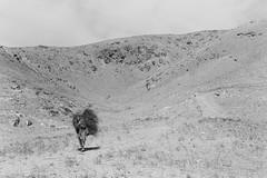 Herat, Afghanistan - Nov 1977 (johnjackson808) Tags: blackandwhite bw afghanistan monochrome sticks trix streetphotography 1970s 1977 burden herat leicam3