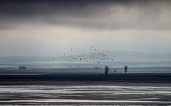 Gallocanta (Aicbon) Tags: blue winter naturaleza verde nature birds canon landscapes spain paisaje zaragoza aragon laguna teruel 100400mm paisatge gallocanta llacuna bandada