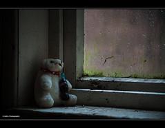vergessener Freund (geka_photo) Tags: deutschland teddy fenster niedersachsen traurig marode vergessen badharzburg melancholie traurigkeit lostplace marodes gekaphoto