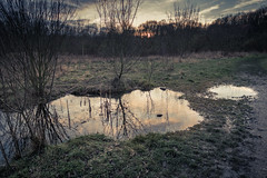 Les Miroirs dans la boue... (Gilderic Photography) Tags: sunset sky reflection nature water canon woods belgium belgique belgie chartreuse reflet liege bois g7x gilderic