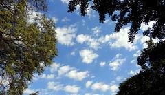 Behind Every Cloud (Khaled M. K. HEGAZY) Tags: blue sky cloud white plant black tree green nature leaves closeup leaf nikon outdoor egypt foliage coolpix sporting maadi سحاب سحب سحابة p520 نادىالمعادى