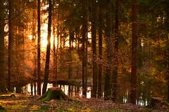 DSC_0267 traumhafte Farben in einem mrchenhaften Sonnenuntergang -  dreamy colors in a fairytale sundown (baerli08ww) Tags: sunset colors forest germany deutschland nikon sonnenuntergang sundown eveningsun natur wald farben rheinlandpfalz abendsonne westerwald rhinelandpalatinate westerforest