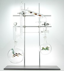 Intricate hand-blown glass aquariums http://bit.ly/1SKbLIl (Darren L Reynolds) Tags: pictures design graphic