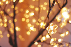 Flower lights (KMRM Photography) Tags: wedding photoraphy weddings kmrm kmrmphotography
