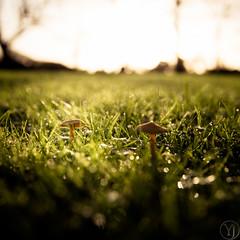 Nature (Zeeyolq Photography) Tags: nature