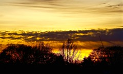 Poetry moves heaven and earth (ahmBerlin) Tags: light sunset sky sun tree berlin colors silhouette clouds landscape dawn licht heaven sonne baum spandau