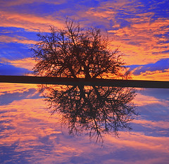 as above, so below (N6ra) Tags: life above blue sunset sky orange tree heaven below as so