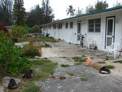 starr-080607-7180-Russelia_equisetiformis-habit-4212_Commodore_Ave_Sand_Island-Midway_Atoll (Starr Environmental) Tags: russeliaequisetiformis