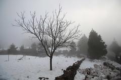 Snow in Gran Canaria (rvr) Tags: snow tree grancanaria arbol nieve canaryislands