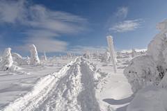 Karkonosze - w drodze na Śnieżne Kotły