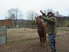 R0026504 (joachimelbing) Tags: mit lustig yoyo spielen pferden yoyogame
