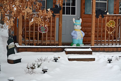 Some Bunny Not Happy (warmheartcold) Tags: snow wisconsin easterbunny crivitz