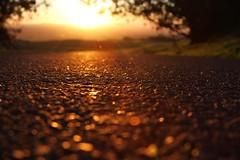 The road less traveled by... (Starrgalla) Tags: road street travel light sunset sunlight way drive shadows pavement path walk run journey sonomacounty glimmer roadway settingsun traveled theroad theway theroadlesstraveledby