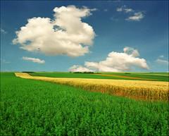 Summer sky (Katarina 2353) Tags: summer film nature field landscape nikon europe serbia vojvodina srbija katarinastefanovic katarina2353