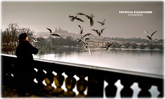 Flaying in Praga (Pat Eizaguirre) Tags: bridge birds praga charlesbridge winterbirds patriciaeizaguirre pateizaguirre