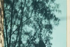 Tucson Shadows (josullivan.59) Tags: trees light shadow wallpaper arizona usa abstract southwest detail green texture leaves yellow wall day pattern unitedstates teal clear april minimalism acqua lightanddark artisitic 2015 nicelight canonef24105mmf4lisusm 3exp canon6d