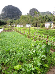 Vegetable field (MelindaChan ^..^) Tags: china sky field countryside village riverside guilin hill vegetable mel limestone melinda 漓江 lijiang guangxi 桂林 廣西 chanmelmel melindachan