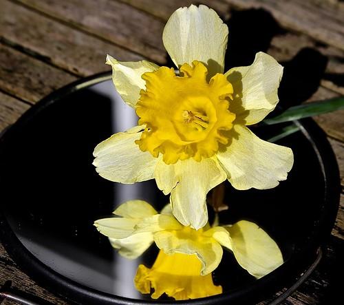 Narcissus en zijn spiegelbeeld