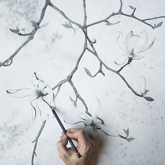 Magnolia (tvc415) Tags: flowers blackandwhite leaves illustration hand branches charcoal magnolia