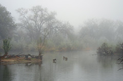 Beauty in the Mist; Albuquerque, NM, Rio Grande Nature Center [Lou Feltz] (deserttoad) Tags: park trees newmexico reflection nature architecture pond scenic cottonwoods