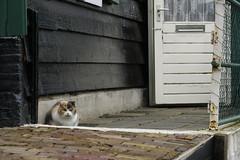 Cat in Marken (Poti Einundneunzig) Tags: door winter cold holland netherlands cat canon eos town puerta outdoor pueblo gato holanda marken paises bajos 70d 18135mm