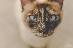 Close up cat. (Jordi Corbilla Photography) Tags: cats nikon girona streetphoto mistakes d7000 jordicorbilla jordicorbillaphotography