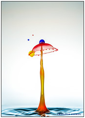 Drop collision-23. (Masudur Rahman Mamoon) Tags: droplet watersplash waterdroplet highspeedphotography dropart liquidsculpture waterdropletphotography glimpsecatcher waterdropcollisionphotography highspeedwaterdropphotography catchtheglimpse