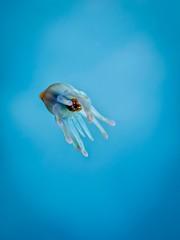 P3255728 (Jeannot Kuenzel) Tags: leica blue sea macro water port photography islands la mediterranean underwater alien under deep scuba diving canarias olympus malta el zen canary supermacro moods asph islas f28 45mm underwaterworld s2000 dg gomera 240z hierro underwaterphotography extrememacro ois jeannot inon macroelmarit underwatercreature kuenzel z240 maltaunderwater underwatermacro underwateralien supermacrophotography ucl165 wwwjk4unet jk4u epl5 maltaunderwatermacro maltaunderwaterphotography bestmaltaunderwaterpictures maltamacro maltascubadiving underwatersupermacro jeannotkuenzel aliensofthedeepblue superextrememacro aliensofthesea